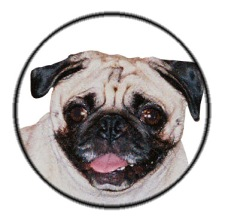 Zsa-Zsa the pug approves of this blog and would eat everything if allowed!
